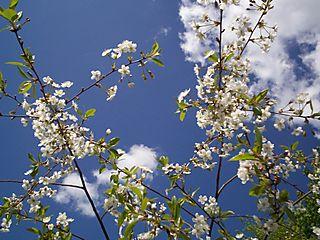 Te Pavasaris