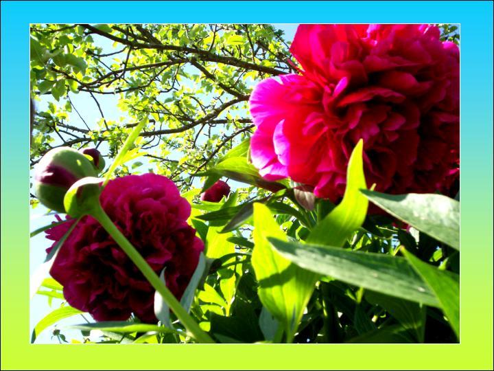 Pavasara gaviles...