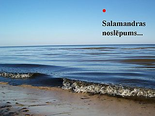 Salamandrai...