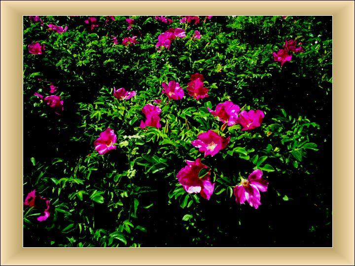 Ziedēšana krustcelēs...