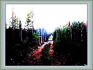 Meža takai...