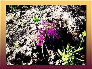 Zemes zieds...