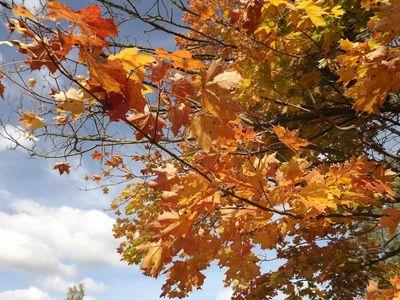 rudens lapās
