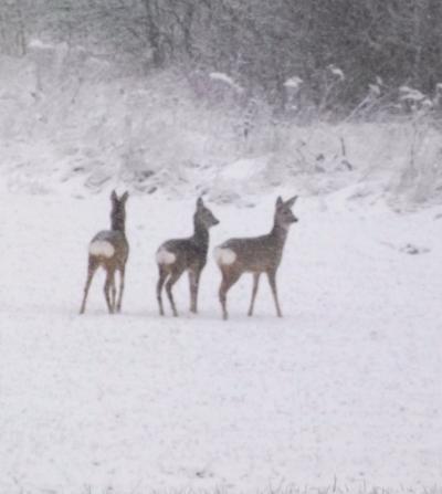 Stirnas sniegā...