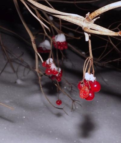 Irbenītes sniegā