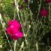 Zied 19. jūlijā