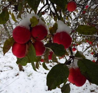 āboli sniegā 25. oktobrī