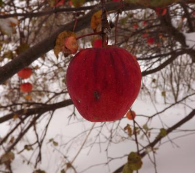 Mārtiņdienas ābols