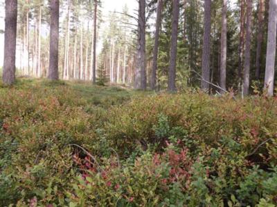 augusts mežā...