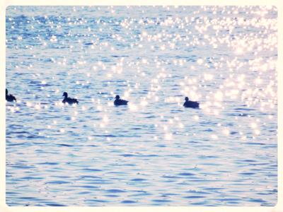 zosis Viļakas ezera viļņos...