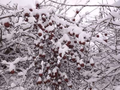 āboli sniegā