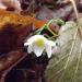 Balts ziediņš starp zeltainām lapām