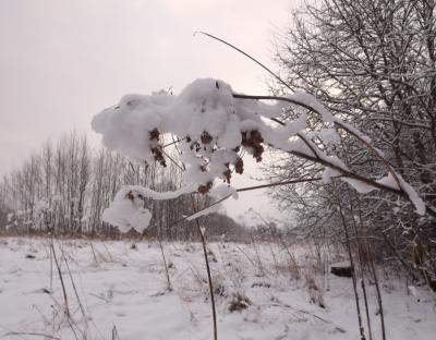 Baltajā 17. decembrī