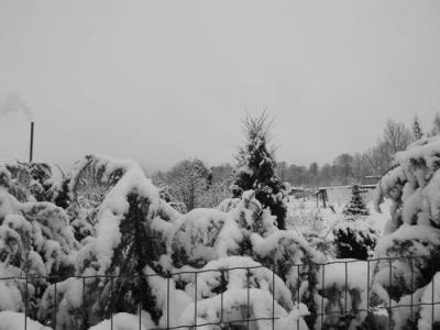 2013. gada 8. februārī