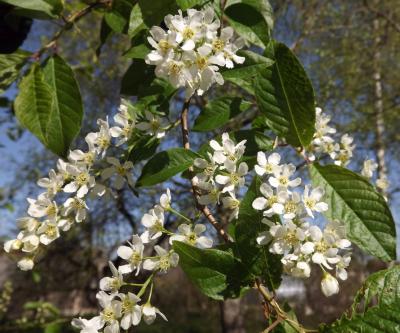 Zied ieva 6. maijā...