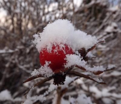 Sarkans auglītis 1. decembrī