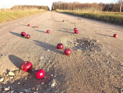 Sarkani āboli uz ceļa