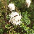 Ziedu reibonī