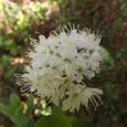 Zied vaivariņš