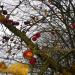 13. novembra āboli