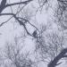 Klijāns kokā