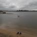 Pelde ezeriņā 30. septembrī