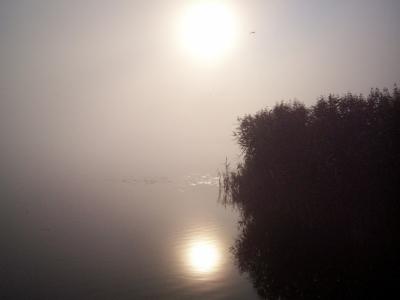 28. augusta rīta saule miglā