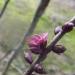 Zalktenes ziediņš Vecgada dienā