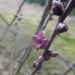 Zalktenītes ziediņš Vecgada dienā