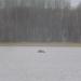 Viļakas ezeriņā 31. decembrī