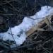 Ledusmatu sēne 29. decembrī