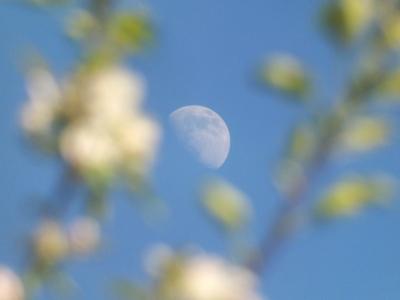 Mēness ābeļziedā 31. maijā