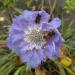 Bitītes ziedā 16. oktobrī