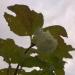Irbenes ziediņš 16. oktobrī-1