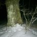 Birznieku ozols 22. februāra vakarā