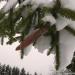 Zem sniega cepures 29. decembrī