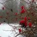 Sarkanas ogas Vecgada dienā