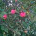 āboli ceļmalas ābelē 15. septembrī